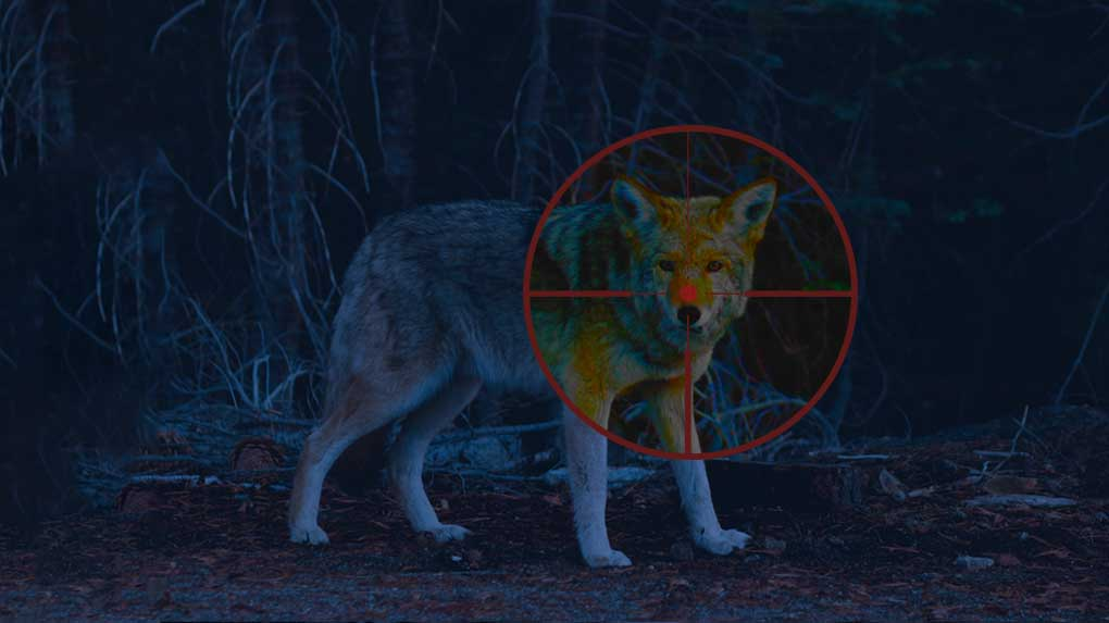 Best-light-for-coyote-hunting-at-night