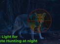 Best Light for Coyote Hunting at Night: Top 5 Coyote Spotlights