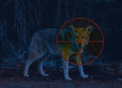 Best Light for Coyote Hunting at Night: Spot Your Game!