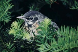 The Role of Night Vision Binoculars for Wildlife Viewing & Bird Watching